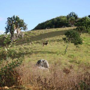 domaine la grave, hike, hike in mauritius, ecomauritius.mu