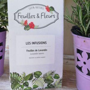lavender leaves tea