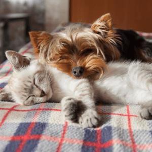 calm pets remedy natural products on ecomauritius.mu