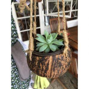 coconut hanger on ecomauritius.mu 1
