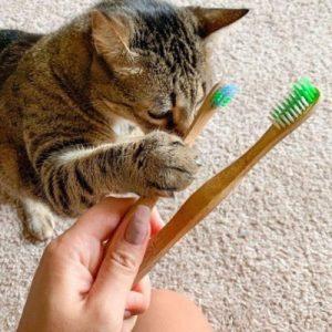 pet bamboo toothbrush on ecomauritius.mu